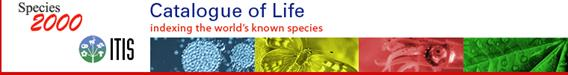 catalog of life logo